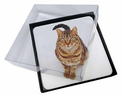 4x Brown Tabby Cat Picture Table Coasters Set in Gift Box, AC-160C