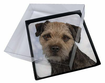 4x Border Terrier Dog Picture Table Coasters Set in Gift Box, AD-BT3C