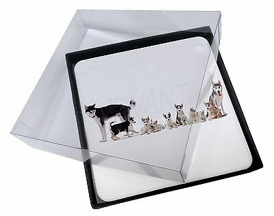 4x Siberian Huskies Picture Table Coasters Set in Gift Box, AD-H56C