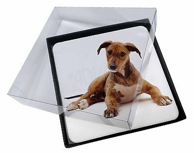 4x Lurcher Dog Picture Table Coasters Set in Gift Box, AD-LU2C