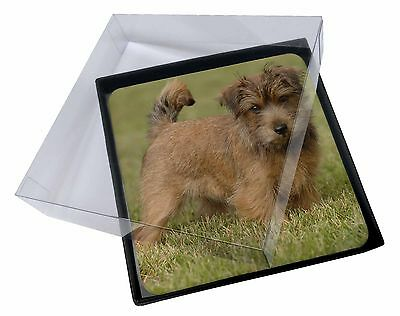 4x Norfolk Terrier Dog Picture Table Coasters Set in Gift Box, AD-NT1C