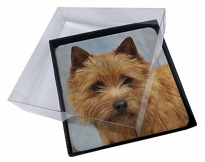 4x Norfolk-Norwich Terrier Dog Picture Table Coasters Set in Gift Box, AD-NT2C