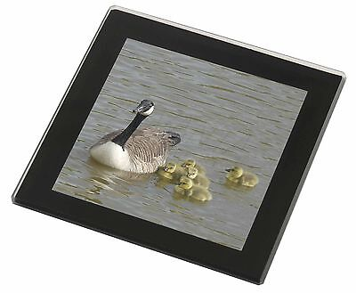 Canadian Geese and Goslings Black Rim Glass Coaster Animal Breed Gift, AB-G1GC