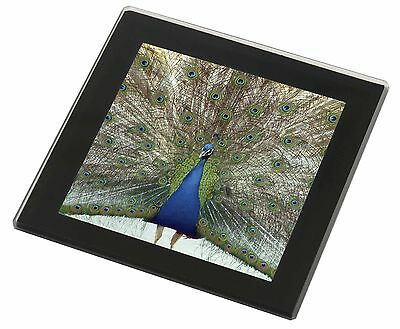 Rainbow Feathers Peacock Black Rim Glass Coaster Animal Breed Gift, AB-PE13GC