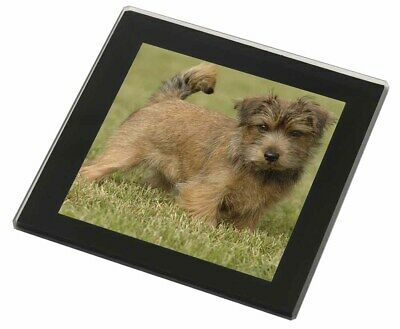 Norfolk Terrier Dog Black Rim Glass Coaster Animal Breed Gift, AD-NT1GC