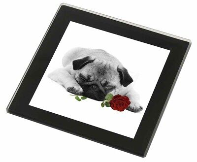 Pug (B+W Photo) with Red Rose Black Rim Glass Coaster Animal Breed G, AD-P92R2GC