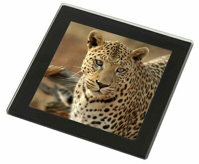 Leopard Black Rim Glass Coaster Animal Breed Gift, AT-5GC