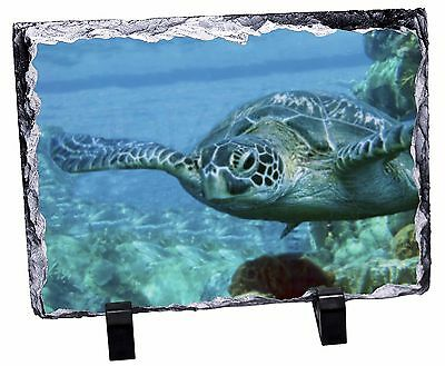 Turtle by Coral Photo Slate Christmas Gift Ornament, AF-T20SL