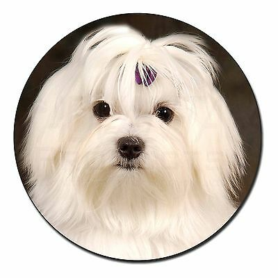 Maltese Dog Fridge Magnet Stocking Filler Christmas Gift, AD-M1FM