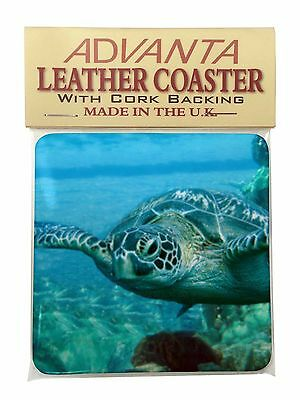 Turtle by Coral Single Leather Photo Coaster Animal Breed Gift, AF-T20SC