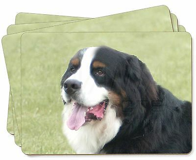 Bernese Mountain Dog Picture Placemats in Gift Box, AD-BER1P