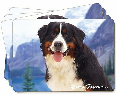 Bernese Mountain Dog Picture Placemats in Gift Box, AD-BER6yP