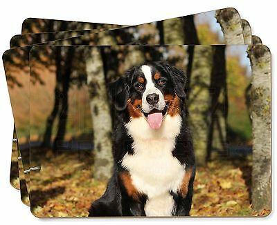 Bernese Mountain Dog Picture Placemats in Gift Box, AD-BER7P
