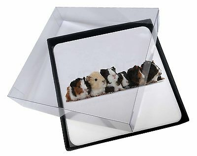 4x Baby Guinea Pigs Picture Table Coasters Set in Gift Box, GIN-4C