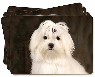 Maltese Dog Picture Placemats in Gift Box, AD-M1P