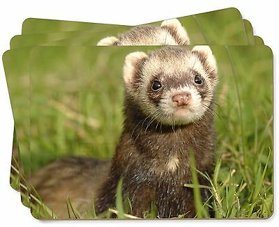Polecat Ferret Picture Placemats in Gift Box, FER-1P