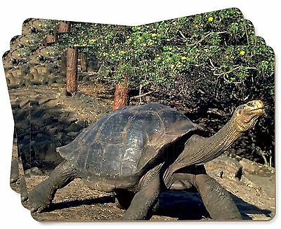 Giant Galapagos Tortoise Picture Placemats in Gift Box, AR-T10P