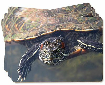 Terrapin Intrigued by Camera Picture Placemats in Gift Box, AR-T1P