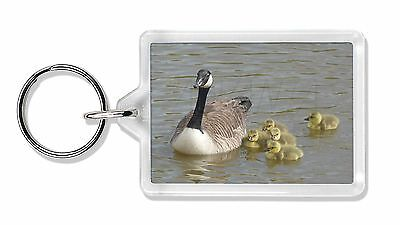 Canadian Geese and Goslings Photo Keyring Animal Gift, AB-G1K