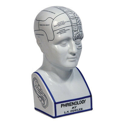 Phrenologie Kopf Porzellan Authentic Models Phrenology