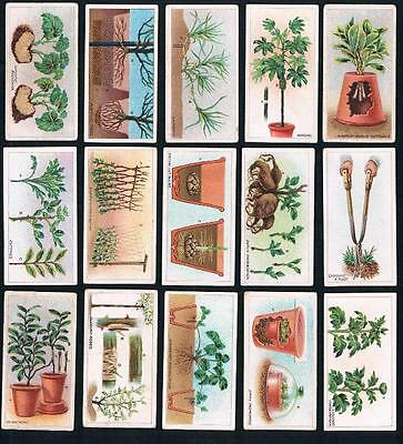 1923 ITC C15 Gardening Hints Tobacco Cards Complete Set of 50