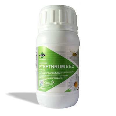 PYRETHRUM 5EC 100ml Organic Insecticide Plant Pest Control Aphids Mite White fly