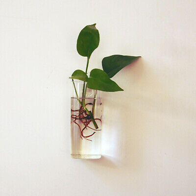 Rectangle Wall Hanging Glass Flower Planter Vase Pot Bottle Container Home