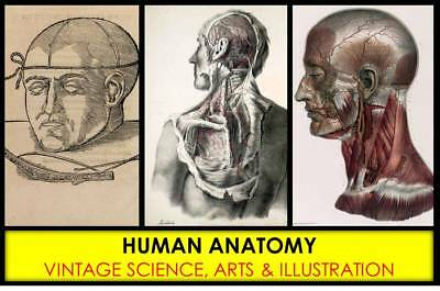 VINTAGE HUMAN ANATOMY Illustrations Images Organ Medical Pictures Paintings DVD