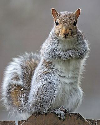 Squirrels / Squirrel 8 x 10 / 8x10 GLOSSY Photo Picture Image #23