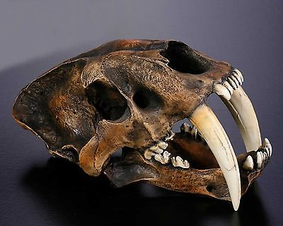 Resin Replica 1:1 Saber-toothed Tiger Skull Model Anatomy With Stand Home Office