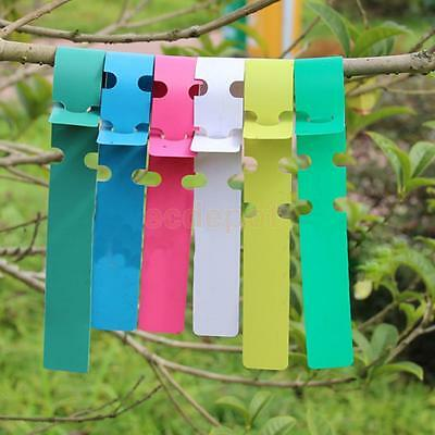100x Plastic Plant Tree Hanging Markers Tags Nursery Seed Gardening Labels Pick