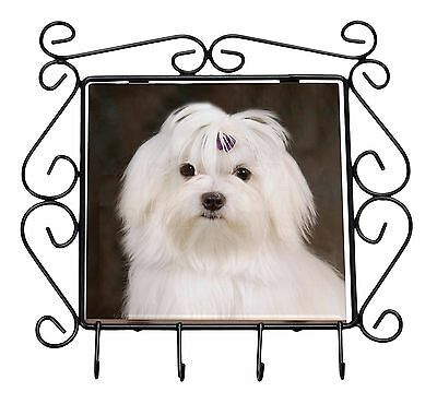 Maltese Dog Wrought Iron Key Holder Hooks Christmas Gift, AD-M1KH