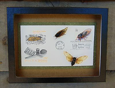 FDC1) Real CICADA insect specimens on framed FDC stamp envelope taxidermy bug US