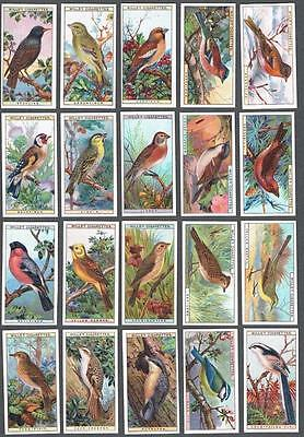 1915 Wills's Cigarettes British Birds Tobacco Cards Complete Set of 50