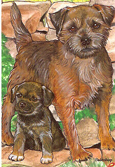 Border Terrier Box of 12 Note Cards Notecards