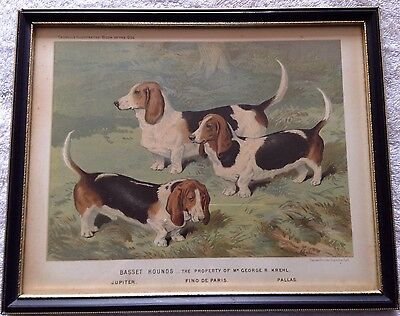 CASSELLS BOOK OF THE DOG BASSET HOUNDS 1880s OLD ANTIQUE FRAMED PICTURE PRINT