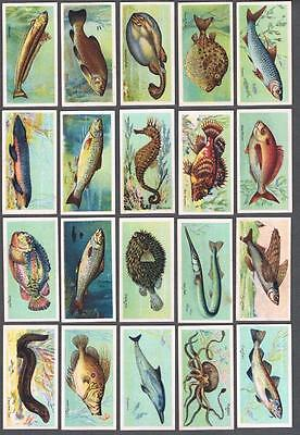 1924 ITC C12 Fishes of The World Tobacco Cards Complete Set of 50