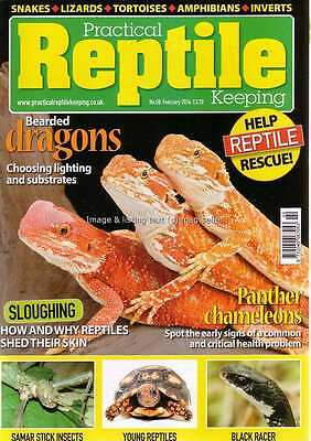 Practical Reptile February 2014 Bearded Dragons Panther Chameleons Black Racer