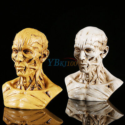 10cm Human Anatomical Anatomy Skull Head Muscle Bone Medical Model Realistic New