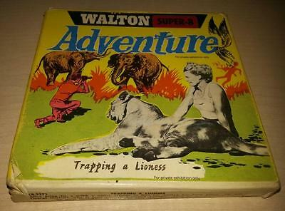 Φ Película Antigua, Adventure Trapping A Lioness Walton Super 8 Φ