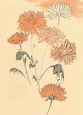 JAPAN. Anonymous study of Chrysanthemums 1890 old antique print picture