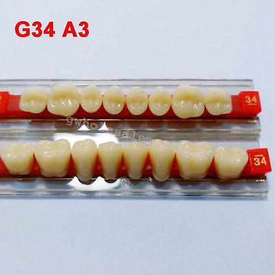 G34 A3 Posterior Teeth Acrylic Resin teeth Denture Teeth Shade