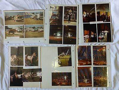 Circus Photos Real 1980's Lot Pictures Carnival