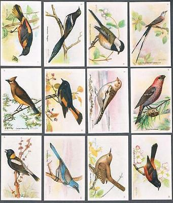 1924 Church & Dwight Useful Birds of America Series 8 Trading Cards Complete Set