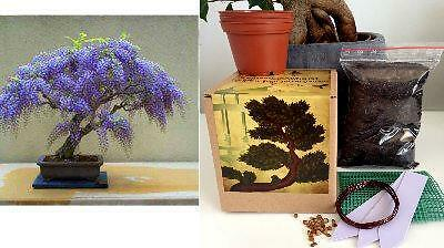 Wisteria Bonsai Growing Kit -Seeds2x/Pots/Soil/Mesh/Markers/Instructions/Wire