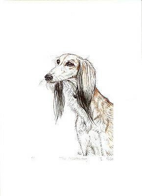 Saluki Limited Edition Print by UK Artist Elle Wilson The Understanding