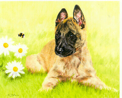 Belgian Shepherd Malinois Limited Edition Puppy Print Why So Busy?