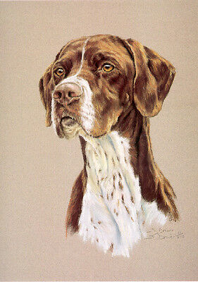 English Pointer Limited Edition Art Print by UK Artist Sue Driver