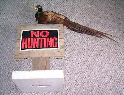 Perched Ringneck Rooster Pheasant Taxidermy Mount On Stand