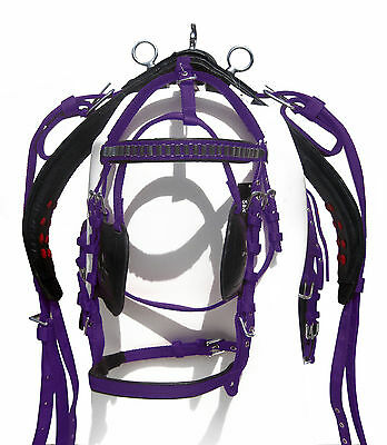 Nylon Driving Harness For Single Horse Black/purple Color In Shetland Size